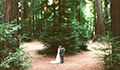 Redwood Forest Wedding Venue