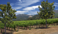 Wine Country Wedding Destination