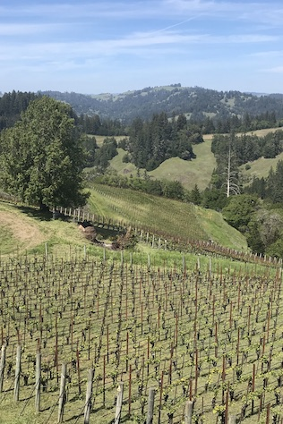 sonoma wine country in northern california